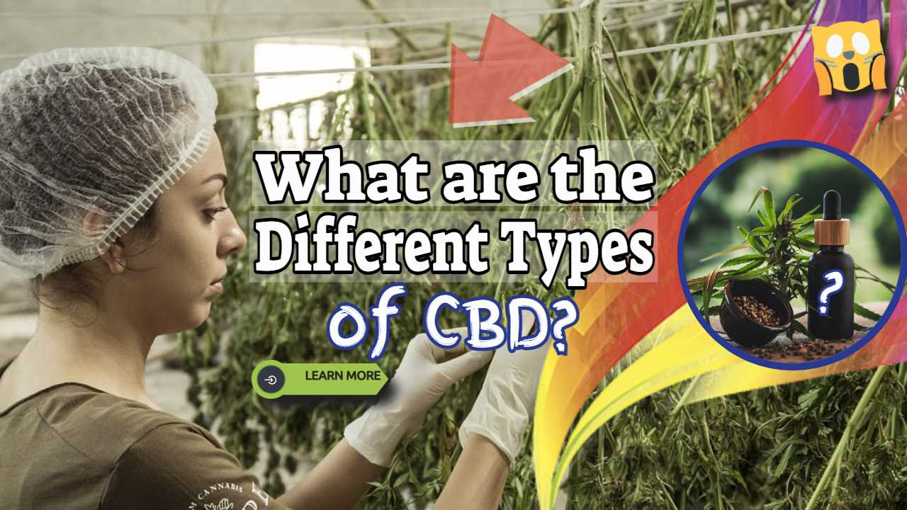 "Image text: ""What are the different types of CBD""."